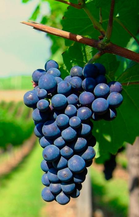 winetour.jpg